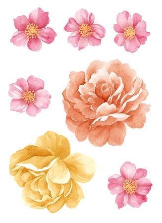 수채화 그림 꽃 간단한 흰색 배경에 설정 스톡 콘텐츠