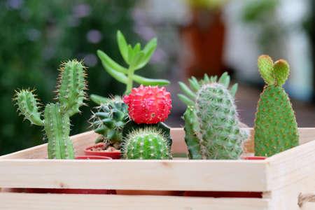 Kleine Cactus en Succulent in mooie houten dienblad voor woninginrichting