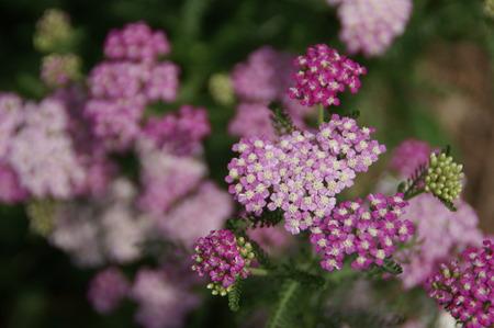 flores peque�as: Peque�as flores de cerca