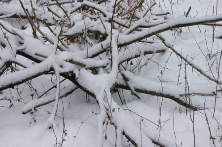 tree branches: Tree branches under the snow Stock Photo