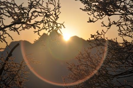 木の枝を山の日の出