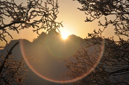 Sunrise in mountains through tree branches