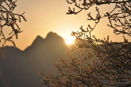 Sunrise in mountain with tree branches