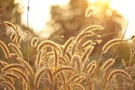 Golden sunset over glass flower field photo