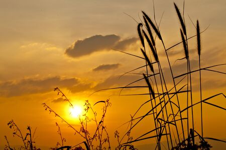 Silhouette of Grass Flowers against a Beautiful Sunset photo
