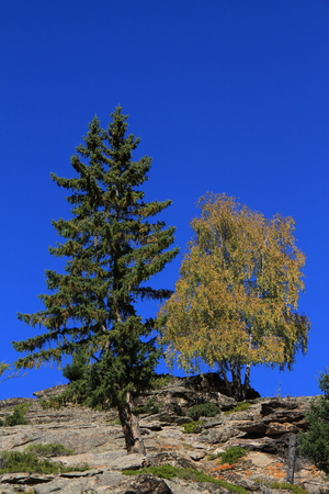 dying: A dying tree and a tree