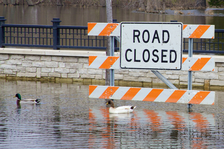 roadway: ROAD CLOSED  Ducks Swim by Flooded Traffic Sign Where Cars Can t Drive Stock Photo
