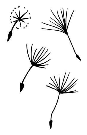hand draw black and white vector illustration dandelion, plant parts, leaves, flowers, seeds Vektorgrafik