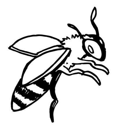 hand draw black and white vector illustration bee, flying insects, summer, honey
