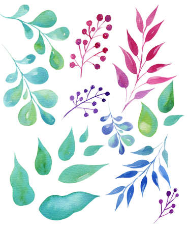 set hand draw watercolor leaves, illusration, sketch, green color, blue color, purple color herbal ornament