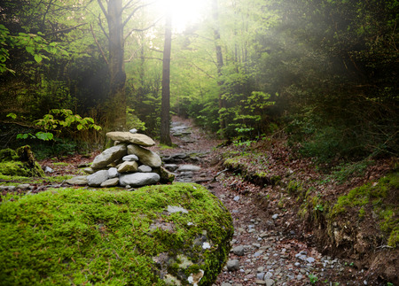 road in deep forest. precious stone path in the forest with sun beam