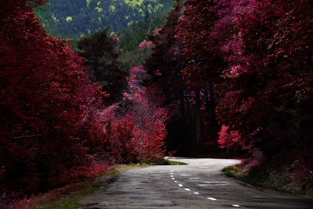 Road trip or ride between mountains with trees