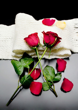 two red roses together with red petals on a black background on a scarf Poetry. Standard-Bild