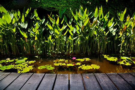Wooden platform with the sea of pink lotus, relaxation. Thailand. Fund relax Standard-Bild