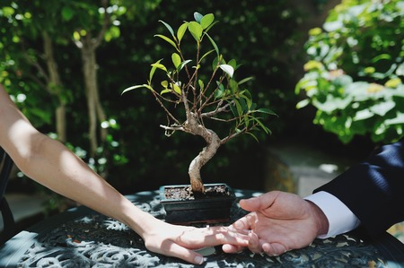 newlyweds: couple bride and groom hands, on background a little bonsai tree - conceptual image