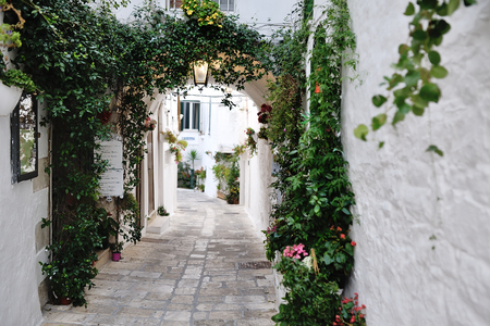 beautiful view of scenic narrow alley with plants, Ostuni, Apulia, southern Italy
