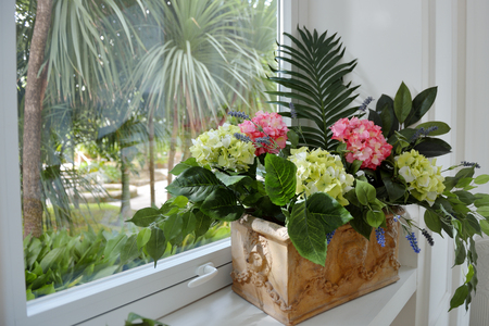 House plant hydrangea and green leaves in a ceramic pot on the windowsill Imagens