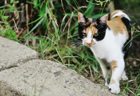 grass beautiful: Beautiful multi-colored cat in the grass