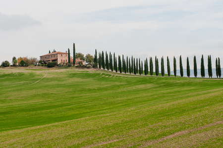 Panoramic view of tuscan landscape with green fields and rows of cypress trees, Tuscany, Italy, Europe