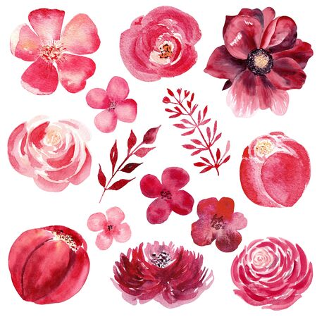 Burgundy flowers hand drawn watercolor illustration set. Botanical, natural design raster drawing. Colorful, vibrant illustration on white background. Summertime greenery wallpaper design