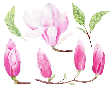 Magnolia closed buds  hand drawn watercolor raster illustrations set. Flower bloom isolated pack. Pastel pink plant.Exotic plantlife aquarelle drawing. Floral colorful graphic design element