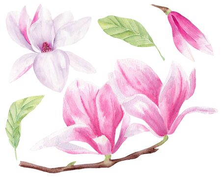 Magnolia blossom hand drawn watercolor raster illustrations set. Blooming flowers isolated pack. Blossoming beautiful plantlife. Pastel petals closeup aquarelle drawing. 写真素材