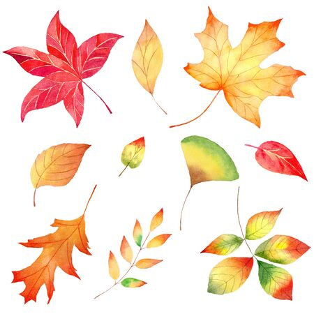 Autumn season forest foliage watercolor raster illustrations set. Various woodland flora, dry herbarium isolated on white background. Colorful maple, chestnut, oak and rowan trees leaves painting