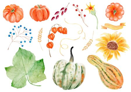 Vegetables, berries and foliage watercolor raster illustrations set. Natural pumpkin, gourd and squash. Seasonal harvest, farm foods and grapes leaf. Wild berries, wheat ears, physalis and sunflower