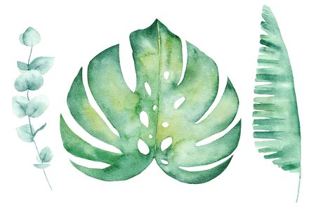 Tropical leaves hand drawn watercolor raster illustration set. Jungle plants isolated cliparts pack. Exotic flora, summertime foliage aquarelle drawing. Monstera, liana colorful graphic design element Stockfoto