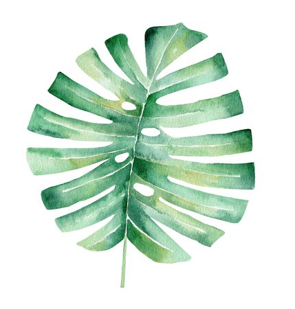 Palm tree leaf hand drawn watercolor raster illustration. Jungle plant isolated clipart. Exotic flora, summertime foliage aquarelle drawing. Monstera colorful graphic design element
