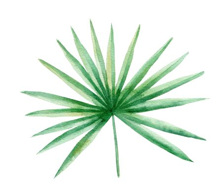Coconut palm leaf hand drawn watercolor raster illustration. Jungle plant isolated clipart. Exotic flora, natural foliage aquarelle drawing. Rainforest herb colorful graphic design element