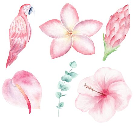 Exotic nature hand drawn watercolor raster illustration set. Parrot jungle flowers isolated cliparts. Orchid, magnolia and liana aquarelle drawing. Rainforest flora and fauna colorful design element
