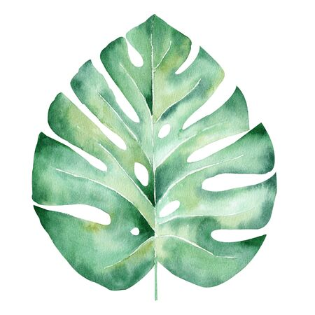 Monstera leaf hand drawn watercolor raster illustration. Jungle tree plant isolated clipart. Exotic flora, natural foliage aquarelle drawing. Tropical herb colorful graphic design element Stockfoto