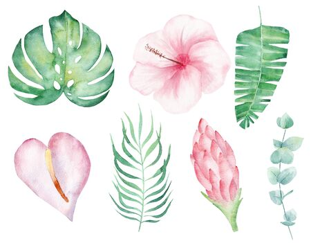 Tropical flowers hand drawn watercolor raster illustration set. Rainforest leaves isolated cliparts. Magnolia, orchid and liana aquarelle drawing. Summer foliage colorful graphic design element