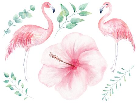 Tropical nature hand drawn watercolor raster illustration set. Flamingo and orchid flowerhead isolated cliparts. Hibiscus, twigs aquarelle drawing. Jungle flora and fauna colorful design element