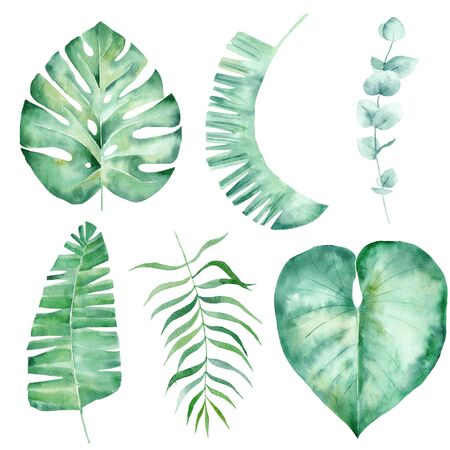 Jungle foliage hand drawn watercolor raster illustration set. Rainforest leaves isolated cliparts. Exotic flora, natural floral aquarelle drawing. Monstera, palm leaf colorful graphic design element
