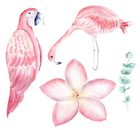 Tropical nature hand drawn watercolor raster illustration set. Parrot and flamingo isolated pack. Exotic flowers, orchid and liana aquarelle drawing. Jungle flora and fauna colorful design element