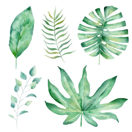 Tropical leaves hand drawn watercolor raster illustration set. Jungle plants isolated cliparts. Exotic flora, natural floral aquarelle drawing. Monstera, liana branch colorful graphic design element