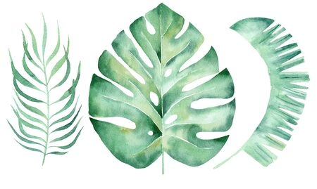 Green leaves hand drawn watercolor raster illustration set. Exotic foliage isolated cliparts. Monstera, palm leaf, liana twig aquarelle drawing. Summer flora colorful graphic design element