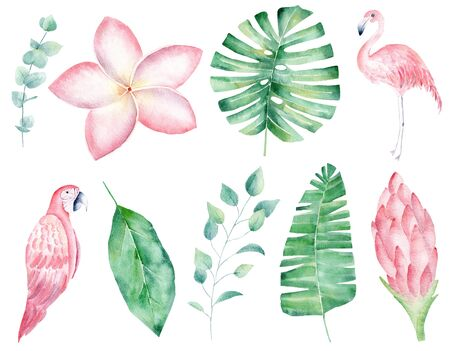 Rainforest nature hand drawn watercolor raster illustration set. Parrot and blooming flower isolated cliparts. Orchid and liana aquarelle drawing. Jungle bird and exotic plants colorful design element