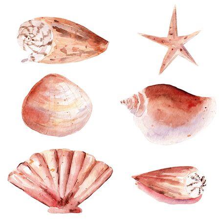Seashells hand drawn watercolor raster illustration set. Starfish, scallop, triton isolated pack. Exotic tropical aquarelle drawing. Aquarium creature, underwater fauna colorful graphic design element