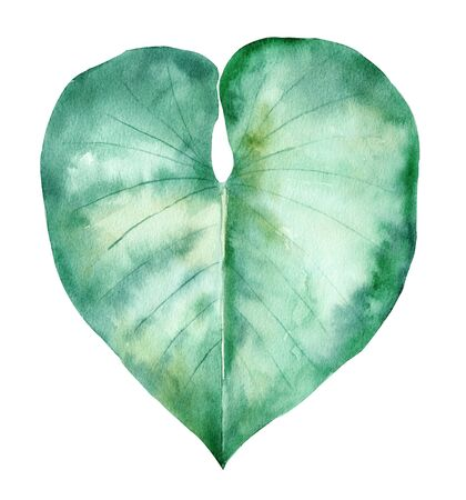 Tropical leaf hand drawn watercolor raster illustration. Rainforest heart shaped plant isolated clipart. Exotic flora, summertime foliage aquarelle drawing. Monstera colorful graphic design element