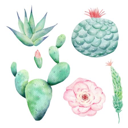Wild cactuses hand drawn watercolor raster illustration set. Blooming cacti, pink bud isolated cliparts. Houseplants aquarelle drawing. Gardening, succulents colorful graphic design element