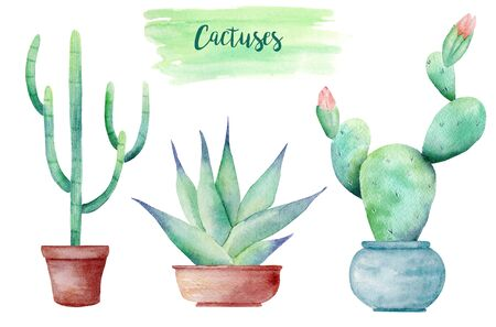 Houseplants in pots hand drawn watercolor raster illustration set. Succulent echeveria and cactus isolated cliparts. Gardening aquarelle drawing. Blooming plant colorful graphic design element Banco de Imagens