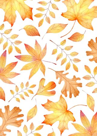 Forest flora, autumn leafage seamless watercolor raster pattern. Golden maple, oak and elm leaves decorative background. Fall herbarium, botanical wrapping paper, wallpaper textile design Reklamní fotografie - 134035893