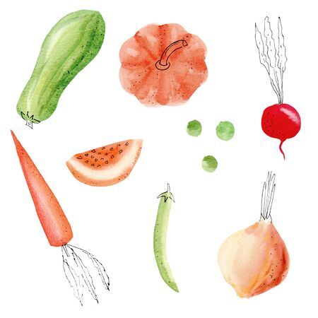 Hand drawn colorful vegetables watercolor illustrations set. Onion, peas, carrot, pumpkin, zucchini, beet isolated on white background pack. Fall, autumn, harvesting season, vegetarian food