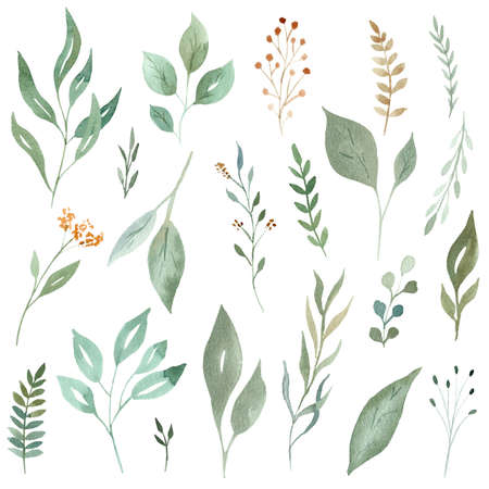 Watercolor greenery leaves and branches set. Hand painted illustration isolated on white background.