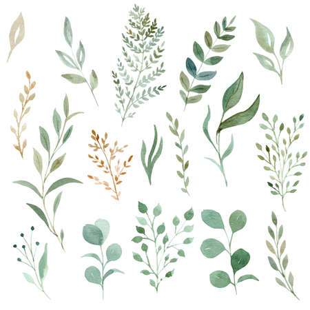 Watercolor eucalyptus and greenery leaves clipart set. Hand drawn illustration.