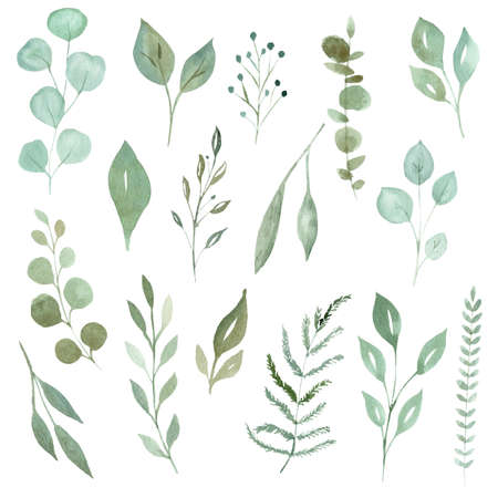 Watercolor greenery leaves and branches set. Hand drawn illustration isolated on white background.