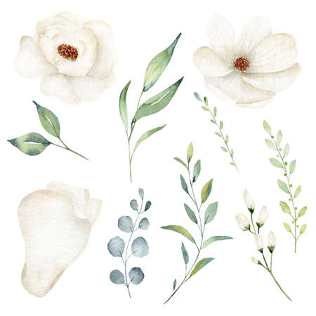 Watercolor white flower and greenery leaves clipart set isolated on white background. 免版税图像